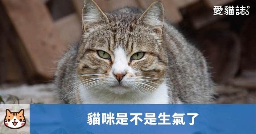 【貓咪行為】貓尾巴大甩不是開心?關於 5 種「貓咪生氣」反應!