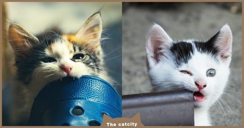 【貓咪亂咬人】打罵就能制止?導致貓咪攻擊飼主「6大NG行為」你中幾項?
