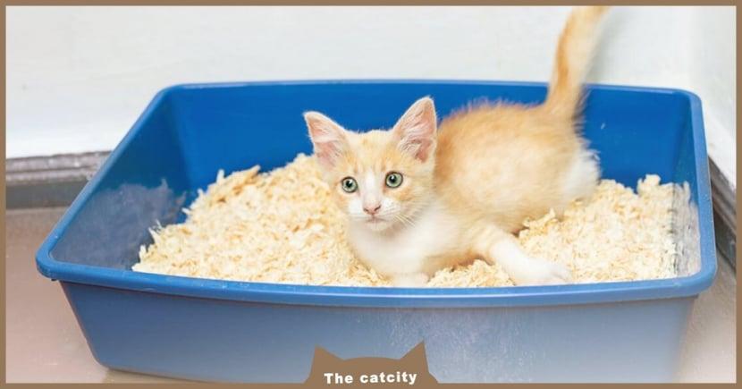 【貓軟便判斷】怎知貓有沒有拉肚子?教你看出 5 種不同等級便便!