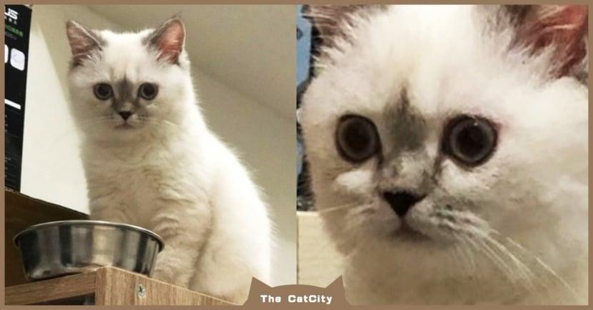萌貓翻臉!飼料碗前「皺眉怒瞪」等放飯,滿臉不耐煩:飯呢?