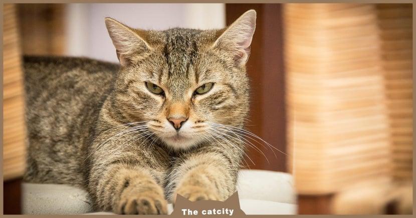 【公貓發情表現】到處噴尿亂叫?公貓發情多久?6 種公貓發情徵兆一覽文!