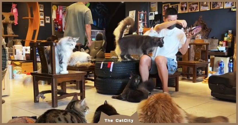 貓奴天堂!進門秒被 40 隻緬因貓包圍,「排隊討抱」超融化 網紅直喊:我好幸福