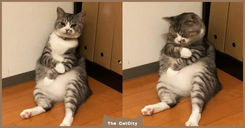 日本萌貓「角落度估樣」激似打完疫苗,邊按手臂+臉奧嘟嘟:唉唷~好痛哦