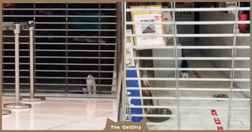 路人求助「貓困店裡」一直叫,轉運站「慣犯貓」被認出 網笑:快變景點了