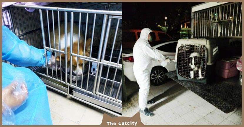 【Delta入侵】確診者住院,貓狗怎麼辦?動保處「媒合寵物旅館」協助安置毛小孩