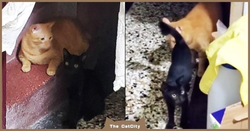 下班回家「跑出黑貓」超傻眼,「私闖民宅」還開心踏踏:大橘收我當小弟!