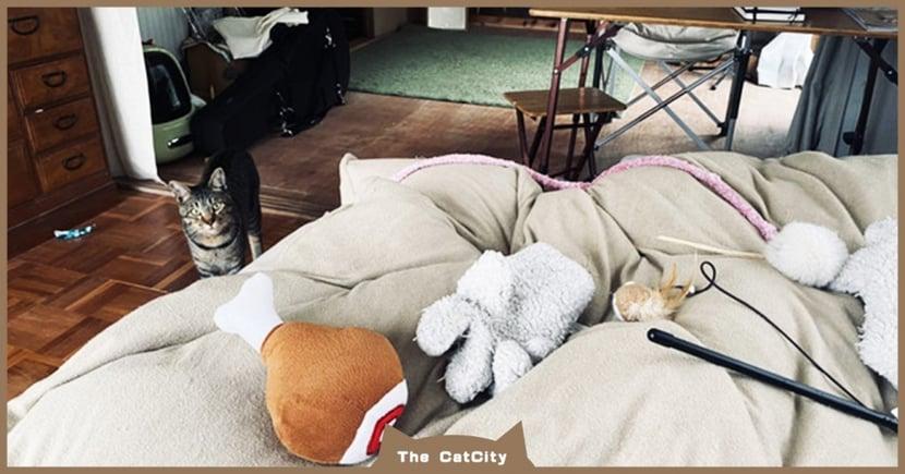 打疫苗發燒!飼主醒來「床上堆滿玩具」,貼心虎斑在旁守護超暖