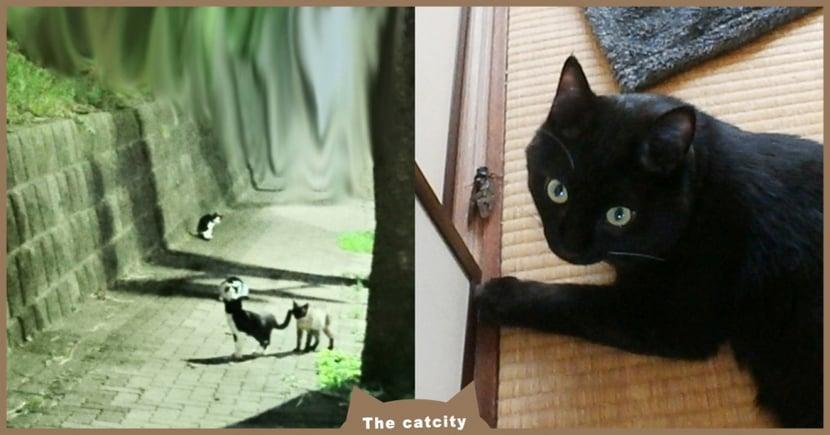 日本推主「愛貓走失」絕望急哭,向「浪貓求助」成功找回 奴才:傳說是真的!