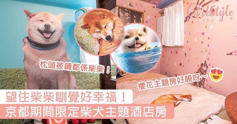 望住柴柴瞓覺好幸福!京都期間限定柴犬主題酒店房,粉嫩櫻花、治癒家居風格勁吸引~