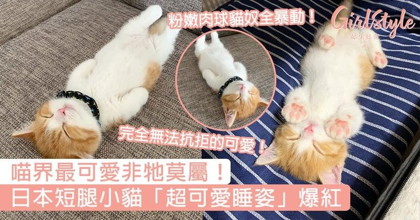 網友一看秒融化:根本喵界瑰寶!日本短腿小貓「超可愛睡姿」爆紅,超粉嫩肉球讓貓奴全暴動!