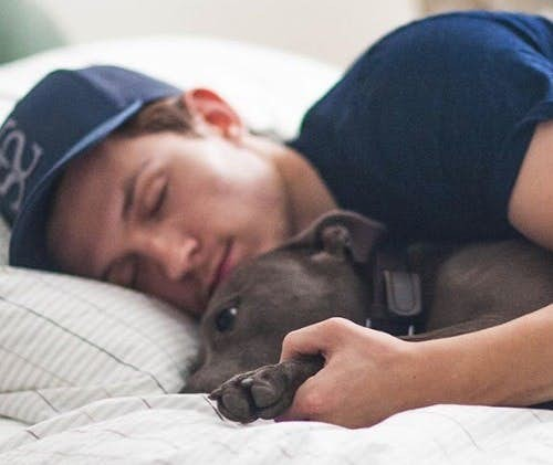 tom-holland-on-bed-with-his-dog_orig
