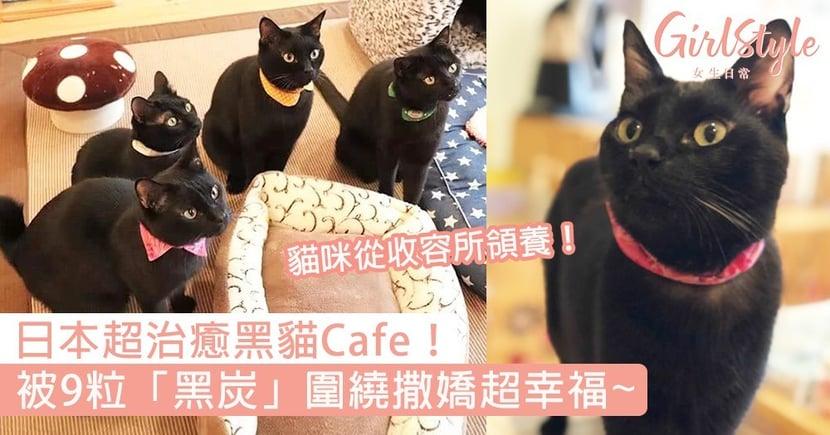 被9隻黑貓圍繞超幸福!日本超治癒黑貓Cafe,收入都會用作幫助貓咪〜