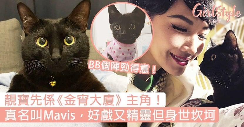 靚寶先係主角!《金宵大廈》黑貓靚寶真名叫Mavis,好戲又精靈但原來身世坎坷?