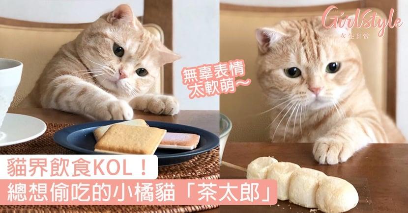貓界飲食KOL!日本小橘貓「茶太郎」,總想偷吃的委屈小表情太萌〜