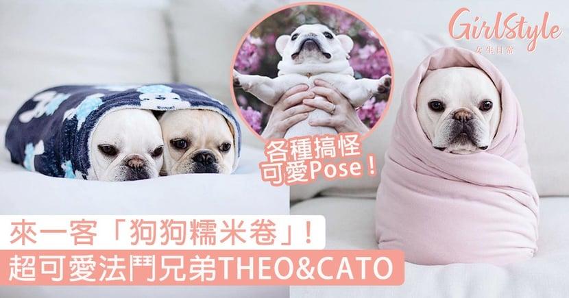超可愛法鬥兄弟THEO&CATO!各種萌爆舉動,要來一客「狗狗糯米卷」嗎?