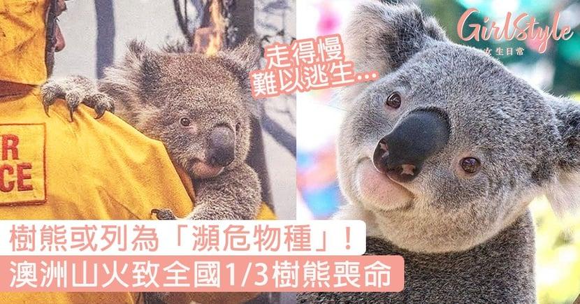 樹熊或列瀕危物種!澳洲山火致全國1/3樹熊喪命,棲息地被嚴重破壞!
