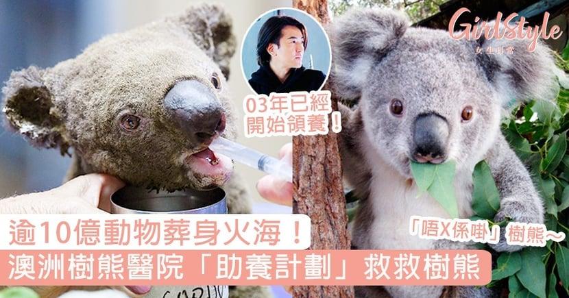 逾10億動物燒死!澳洲樹熊醫院「助養計劃」救救樹熊,鄭伊健助養「唔係啩樹熊」7年成熱話!