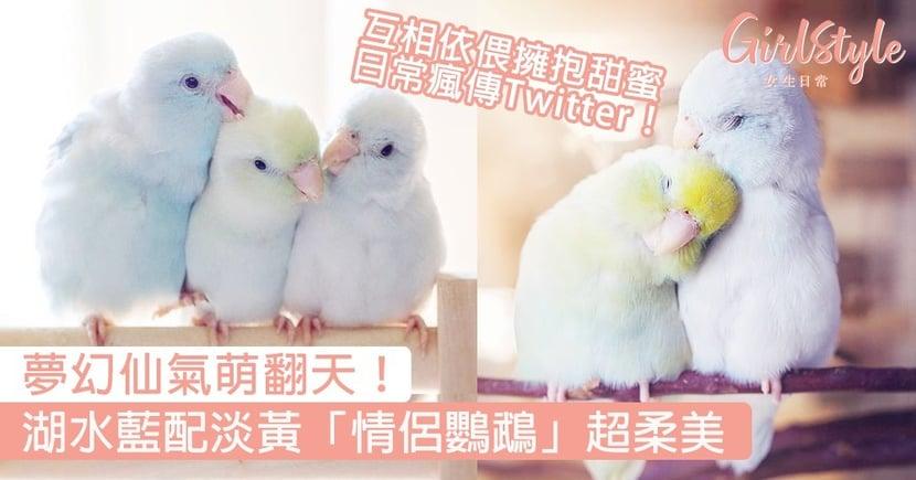 夢幻仙氣萌翻天!湖水藍配淡黃「情侶鸚鵡」超柔美,互相依偎擁抱甜蜜日常瘋傳Twitter!