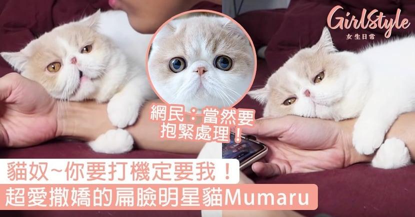 貓奴~你要打機定要我!超愛撒嬌的扁臉貓Mumaru,網民:當然要抱緊處理啊!