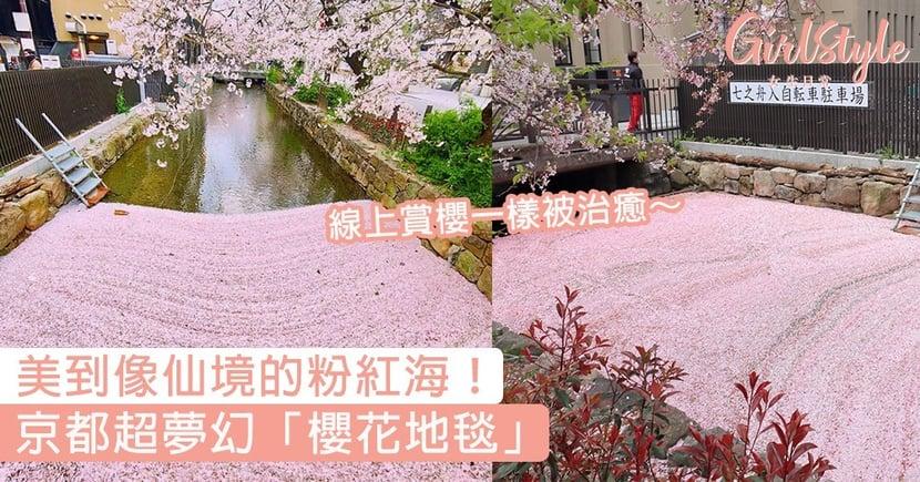 日本京都超夢幻「櫻花地毯」!美到像仙境的粉紅海,線上賞櫻一樣被治癒~
