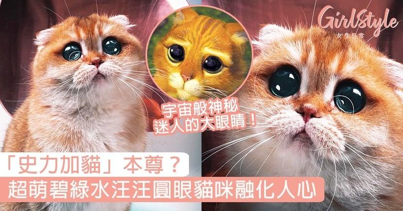 「史力加貓」本尊?超萌碧綠水汪汪圓眼貓咪,如宇宙般神秘迷人的大眼睛!