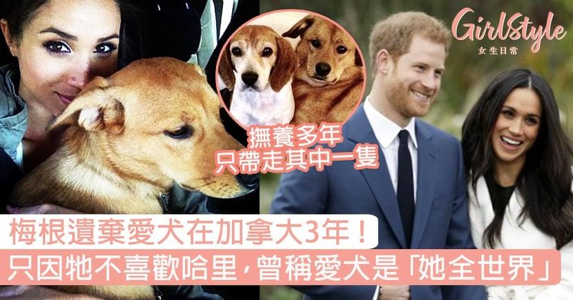 梅根將愛犬留在加拿大3年!只因牠不喜歡哈里,曾稱愛犬是「她的整個世界」