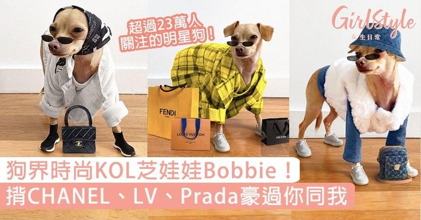 狗界時尚KOL芝娃娃Bobbie!豪揹CHANEL、LV、Prada,時尚魅力不輸人!