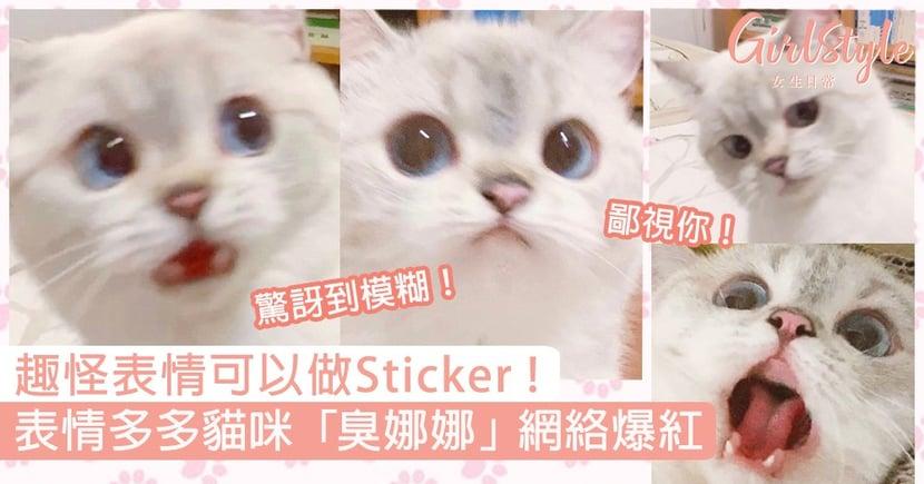 超趣怪英短貓咪「臭娜娜」爆紅!表情多多可以當Sticker,火速吸粉15萬〜