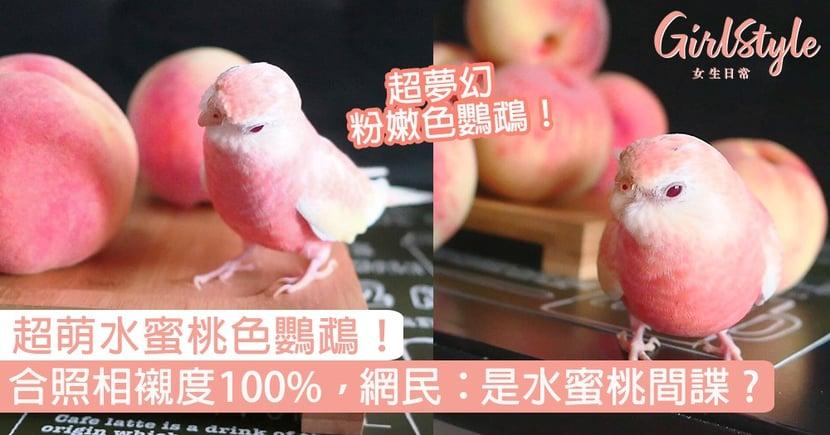 粉紅水蜜桃色鸚鵡!同蜜桃合照相襯度100%,網民:是水蜜桃間諜嗎?