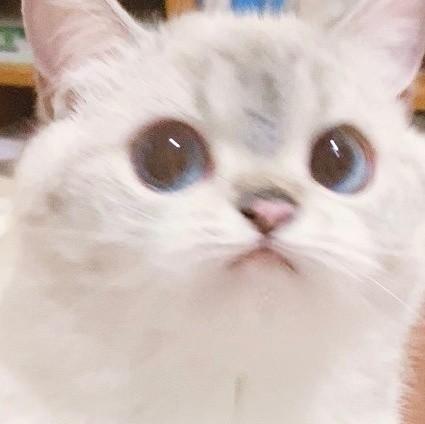 英國短毛貓女「猛猪猪和臭娜娜」網絡爆紅!超趣怪表情可以當Sticker
