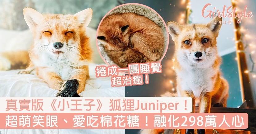 真實版《小王子》狐狸Juniper!超萌笑眼、愛吃棉花糖,融化298萬人心!