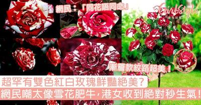 超罕有紅白玫瑰鮮豔絕美?網民嘲太像「雪花肥牛」,香港女生收到絕對秒生氣!