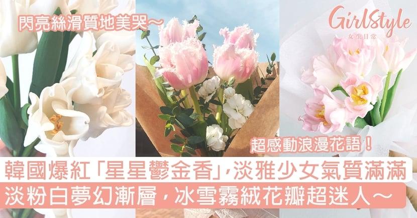 韓國爆紅「星星鬱金香」淡雅少女氣質滿滿~淡粉白夢幻漸層,冰雪霧絨花瓣超迷人!