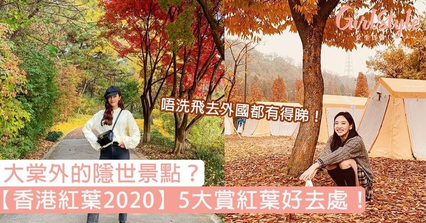 【香港紅葉2020】5大賞紅葉好去處!大棠外的隱世景點?唔洗飛去外國都有得睇!