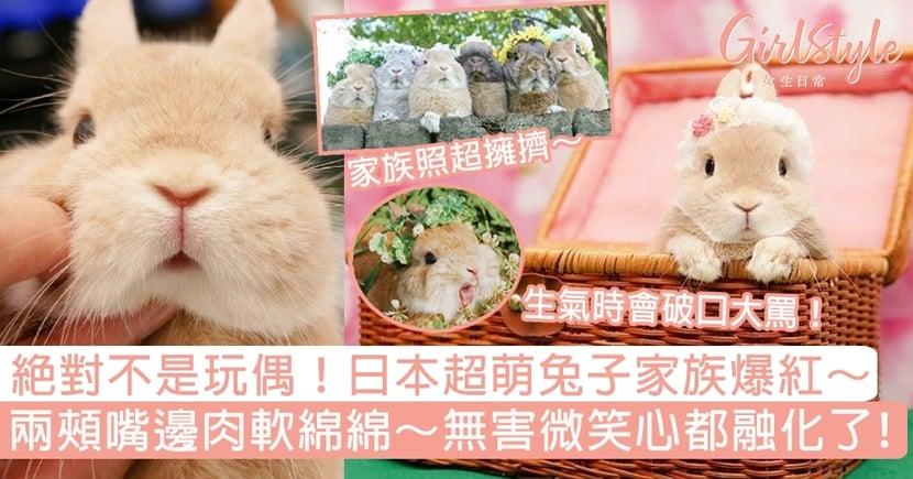 絕對不是玩偶!日本超萌兔子家族爆紅,兩頰嘴邊肉軟綿綿~無害微笑秒融化!