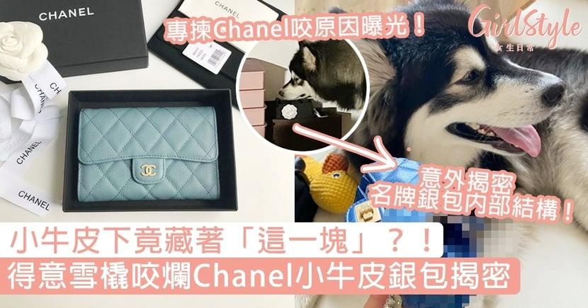 雪橇咬爛Chanel 2.55銀包意外揭密「內部材質」!名貴小牛皮下竟發現這件居家小物?