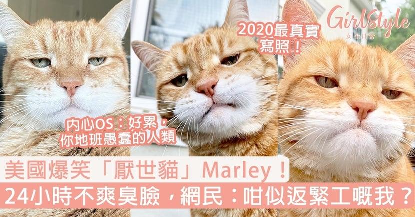 美國爆笑「厭世貓」Marley!24小時一副不爽臭臉,網民:咁似返緊工嘅我?