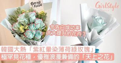 韓國大熱「紫紅暈染薄荷綠玫瑰」!極罕見款式,優雅浪漫兼備的「天上之花」