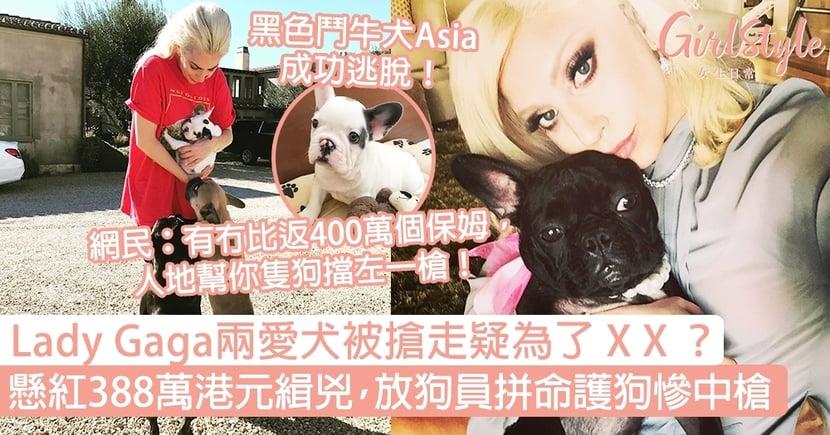 Lady Gaga兩愛犬被搶疑為了X X?懸紅388萬港元緝兇,放狗員拼命護犬慘中槍!