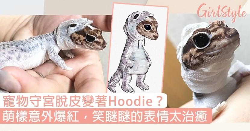 日本寵物守宮脫皮變著hoodie?萌樣意外爆紅,笑瞇瞇的表情太治癒〜