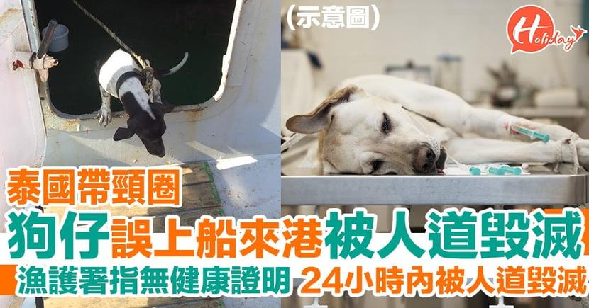 泰國有帶頸圈狗仔錯上貨船嚟香港 因無健康證明遭漁護署人道毀滅