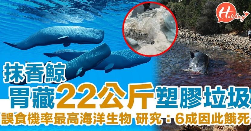 瀕臨絕種!抹香鯨胃藏48磅垃圾 研究:6成誤食塑膠慘死