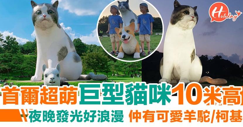 巨型貓咪出沒注意~首爾10米高可愛巨貓必打卡 夜晚仲會發光添!
