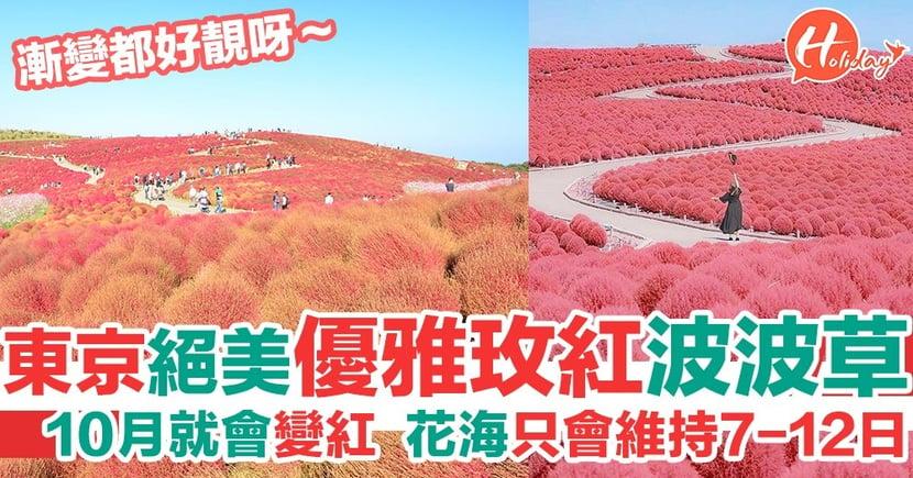 【日本旅遊】東京近郊粉紅波波草花海~有超過3萬棵帚掃草!打卡必去!