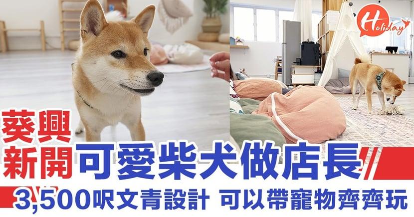 葵興新開共享空間~可愛柴犬做店長 3,500呎可以帶寵物齊齊玩!