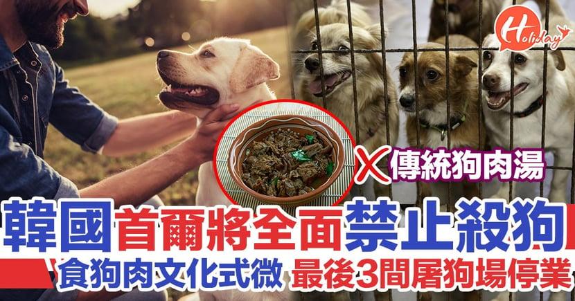韓國食狗肉文化式微 首爾最後3間屠狗場10月底停業 將全面禁止屠狗
