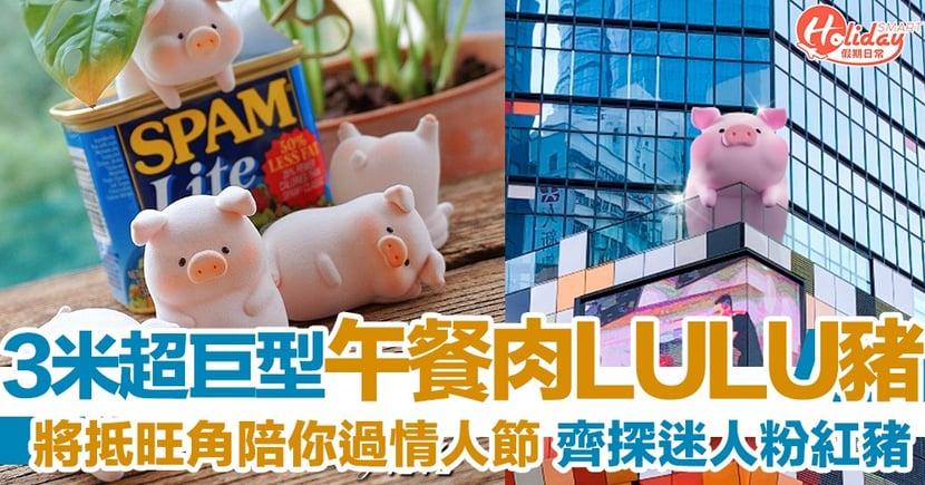 午餐肉LULU豬即將登陸旺角 3米超巨型豬仔陪你過情人節~