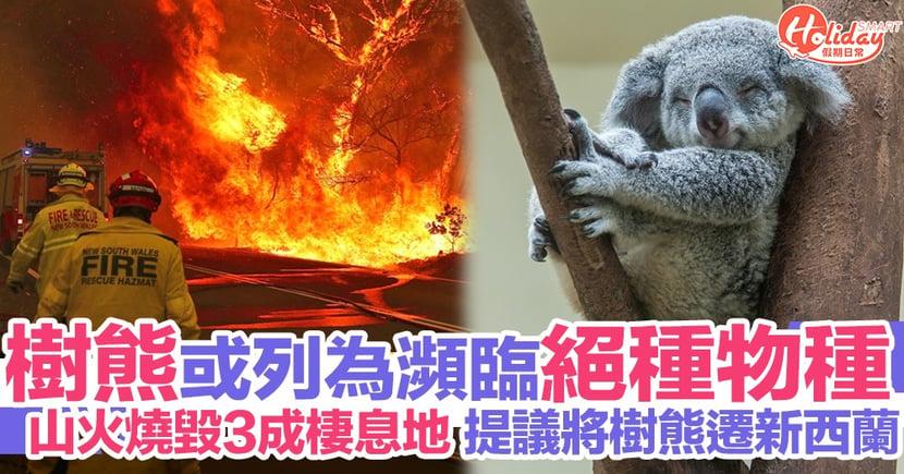 澳洲大火令樹熊死傷慘重 或列為瀕危物種 民眾提議將樹熊遷至新西蘭安置