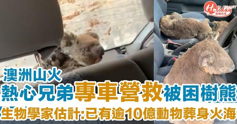 【澳洲山火】保守估計動物燒死數量增至逾10億 熱心兄弟開專車營救被困樹熊:救得一隻得一隻