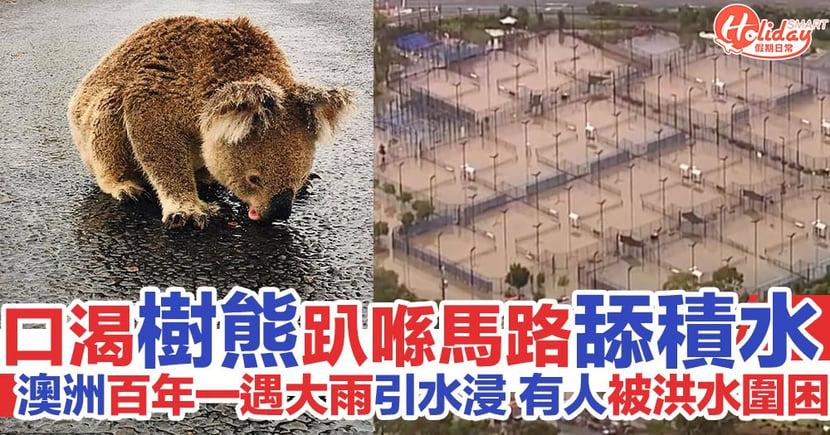 口渴樹熊趴喺馬路上舔積水 澳洲百年一遇大雨引發水浸 有人被洪水圍困
